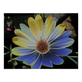 African Daisy Lapis and Gold Print