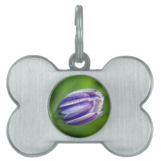 african-daisy pet name tag