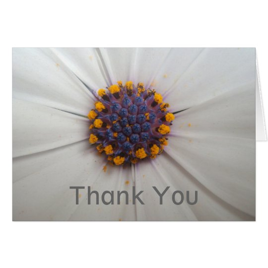 African Daisy Photography Thank You Card