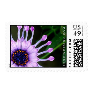 African Daisy Postage