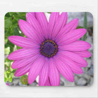 African Daisy (Square) Mouse Pads