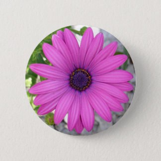African Daisy (Square) Pinback Button