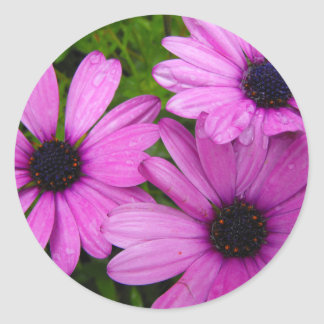 African Daisys Classic Round Sticker