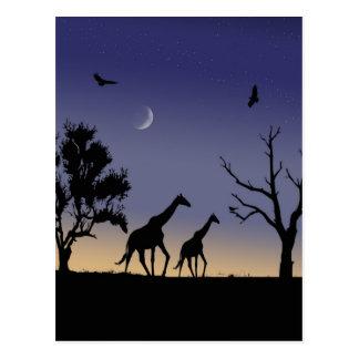 African dawn - giraffes postcard