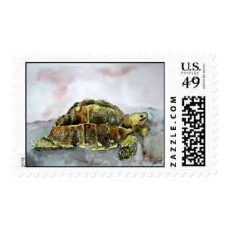african desert tortoise land turtle postage stamps