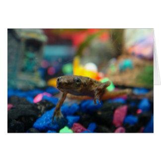 African Dwarf Frog Card