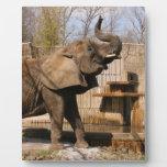 African_Elephant_001 Plaque