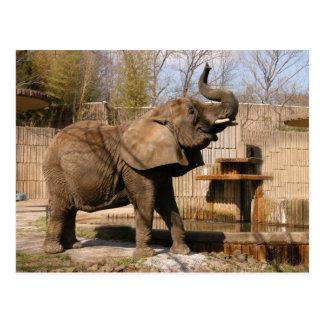 African_Elephant_001 Postcard
