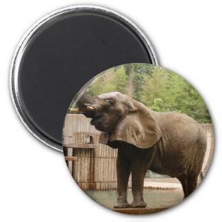 African_Elephant_002 Refrigerator Magnets