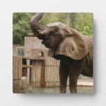 African_Elephant_002 Photo Plaques