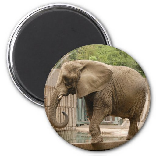 African_Elephant_004 2 Inch Round Magnet