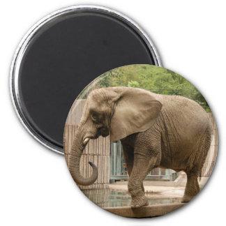 African_Elephant_004 Fridge Magnet