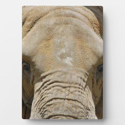 African_Elephant_005 Display Plaque