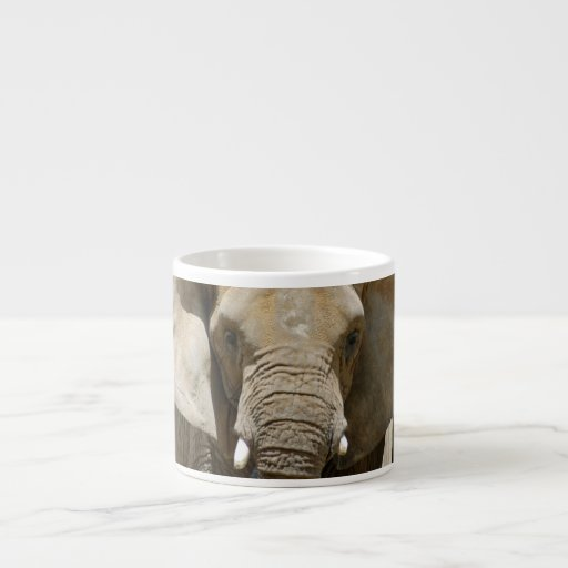 African_Elephant_005 Tazita Espresso
