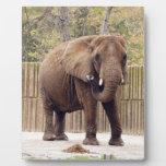 African_Elephant_006 Plaque