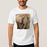 African_Elephant_008 Tees