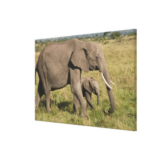 African Elephant and cub (Loxodonta africana), Canvas Print