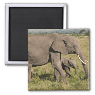 African Elephant and cub (Loxodonta africana), Magnet