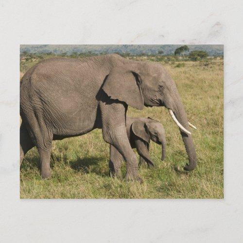 African Elephant and cub Loxodonta africana Postcard