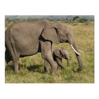 African Elephant and cub (Loxodonta africana), Postcard