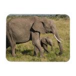 African Elephant and cub (Loxodonta africana), Rectangular Photo Magnet