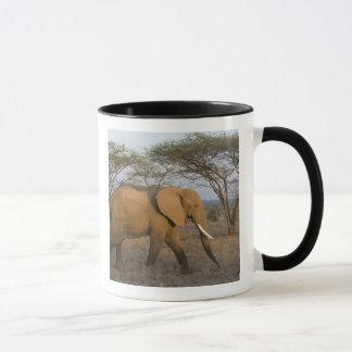 African Elephant at Samburu NP, Kenya. Mug