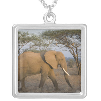 African Elephant at Samburu NP, Kenya. Silver Plated Necklace