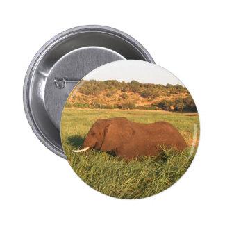 African elephant Chobe Pin
