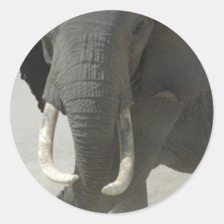 African Elephant Classic Round Sticker