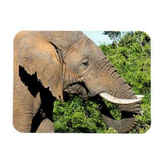 African Elephant eating Rectangular Photo Magnet
