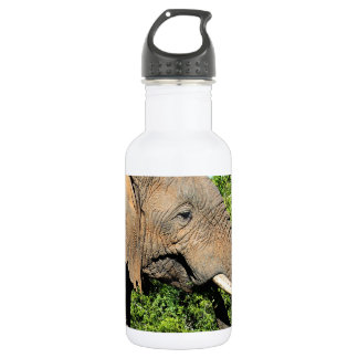 African Elephant eating Stainless Steel Water Bottle