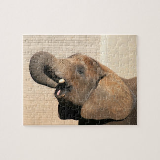 African elephant eats jigsaw puzzles