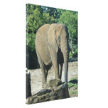 African Elephant Gallery Wrap Canvas