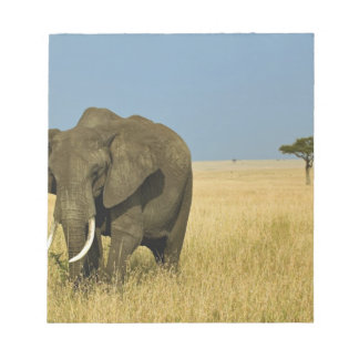African Elephant grazing in tall summer grass, Note Pad