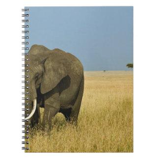 African Elephant grazing in tall summer grass, Notebook