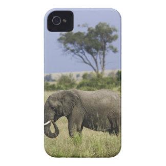 African Elephant grazing, Loxodonta africana, iPhone 4 Case