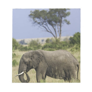 African Elephant grazing, Loxodonta africana, Notepad