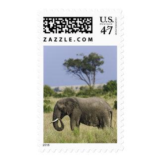 African Elephant grazing, Loxodonta africana, Postage Stamp