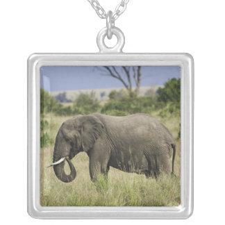 African Elephant grazing, Loxodonta africana, Square Pendant Necklace