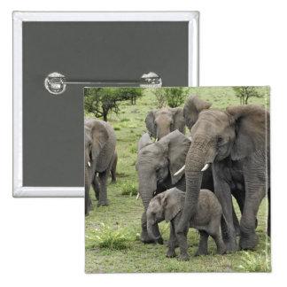 African Elephant herd, Loxodonta africana, 2 Pins