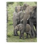 African Elephant herd, Loxodonta africana, 2 Spiral Notebooks
