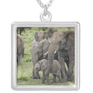 African Elephant herd, Loxodonta africana, 2 Square Pendant Necklace
