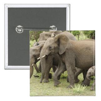 African Elephant herd, Loxodonta africana, 3 Pinback Button