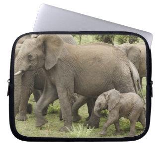 African Elephant herd, Loxodonta africana, 3 Laptop Computer Sleeves