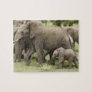 African Elephant herd, Loxodonta africana, 3 Puzzles