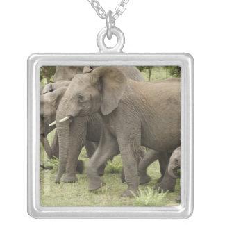 African Elephant herd, Loxodonta africana, 3 Square Pendant Necklace