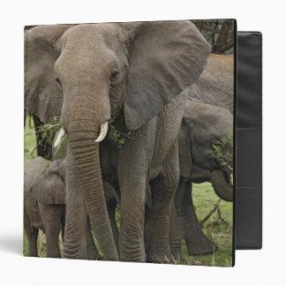 African Elephant herd, Loxodonta africana, 3 Ring Binders