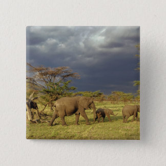 African Elephant herd, Loxodonta africana, Pinback Button