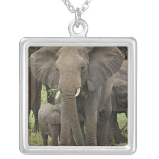 African Elephant herd, Loxodonta africana, Square Pendant Necklace