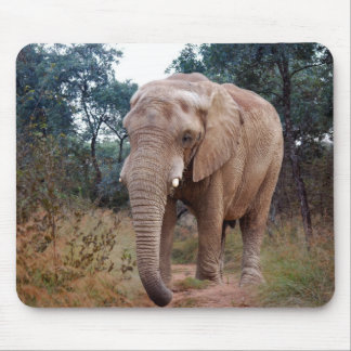 African elephant in the bush mouse pad